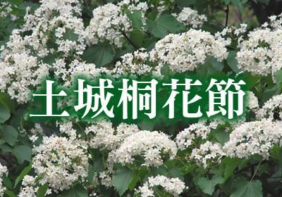 土城桐花節.jpg