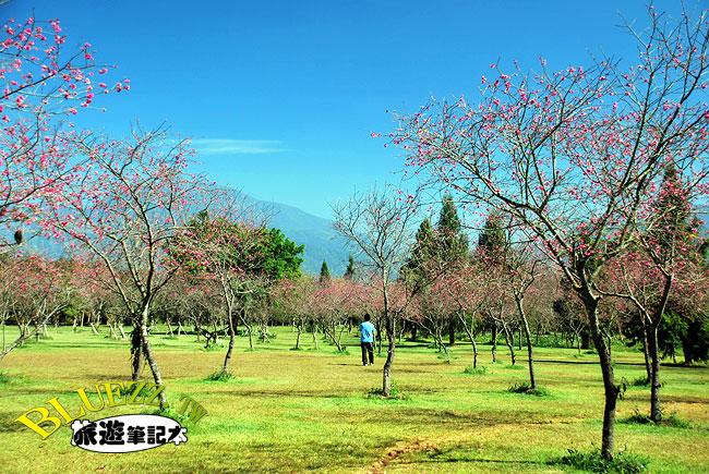 暨南大學櫻花-16.jpg