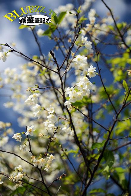 芬園花卉生產休憩園區-04.jpg