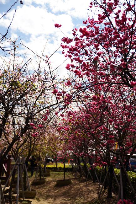 芬園花卉生產休憩園區-07.jpg