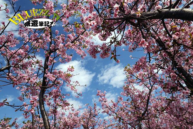 芬園花卉生產休憩園區-14.jpg