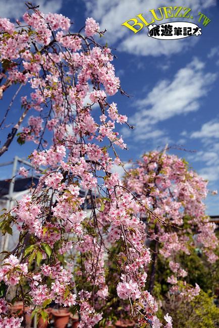 芬園花卉生產休憩園區-20.jpg