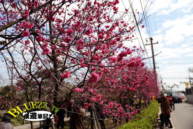 芬園花卉生產休憩園區-21.jpg