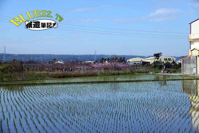 芬園花卉生產休憩園區-22.jpg