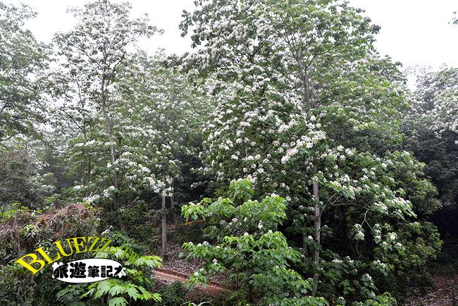 福田賞桐生態園區-06.jpg