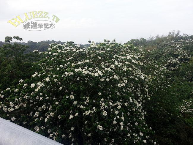 大彰路螢光橋-03.jpg