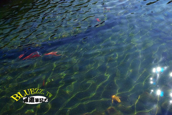新都生態公園-06.jpg