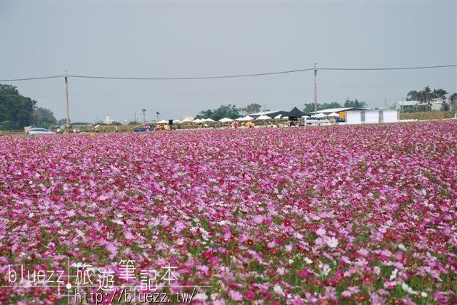 2008新社花海節