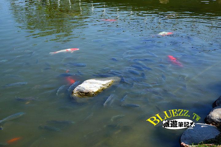 費茲洛公園 生態池