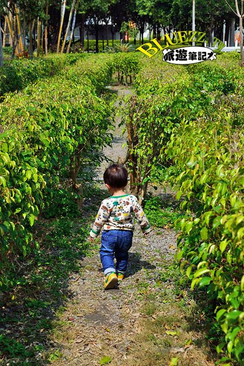 費茲洛公園 迷宮森林區