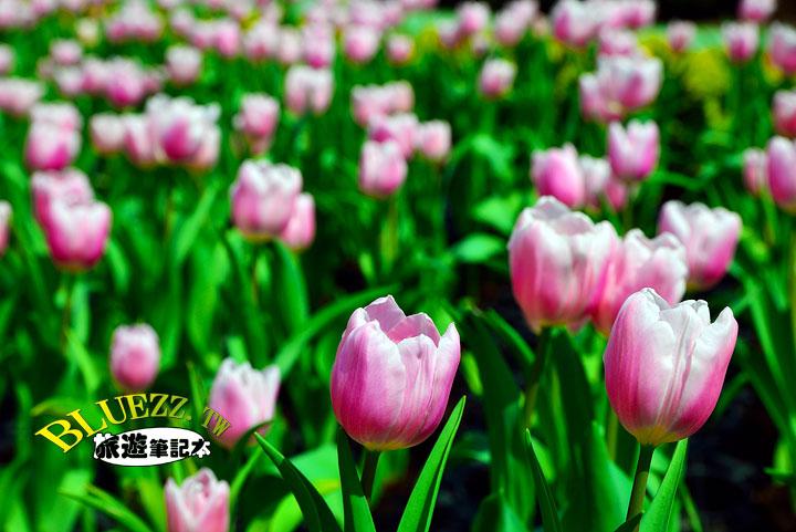 中社觀光花市 24.jpg