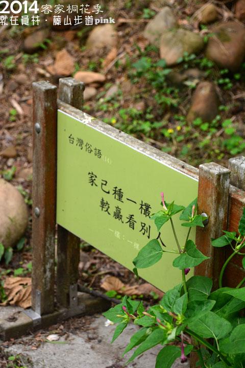 【2014客家桐花季】就是要到「員林藤山」賞桐趣~