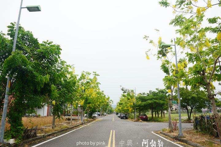 【南投中興新村】黃金雨阿勃勒&荷花季,夏日限定版!-DSC_7677.jpg