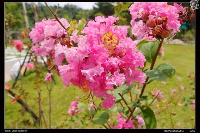 羅莎玫瑰莊園-nEO_IMG_P8174128.jpg