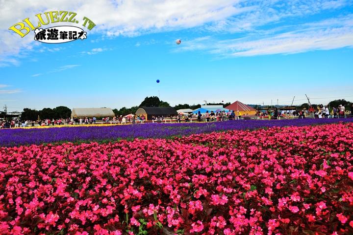 2014新社花海節-DSC_0854.JPG