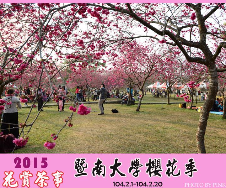 2015暨南大學櫻花季(花賞茶事)。火紅的山櫻花現正盛開中。-1.jpg
