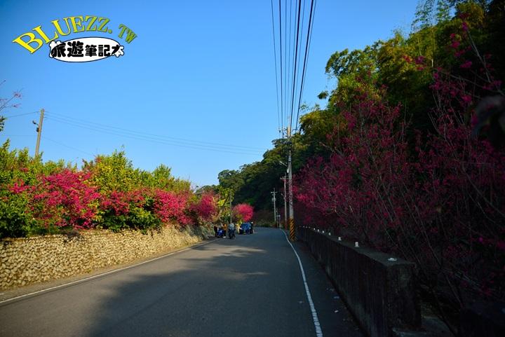 員林湖水巷櫻花-DSC_1122.JPG