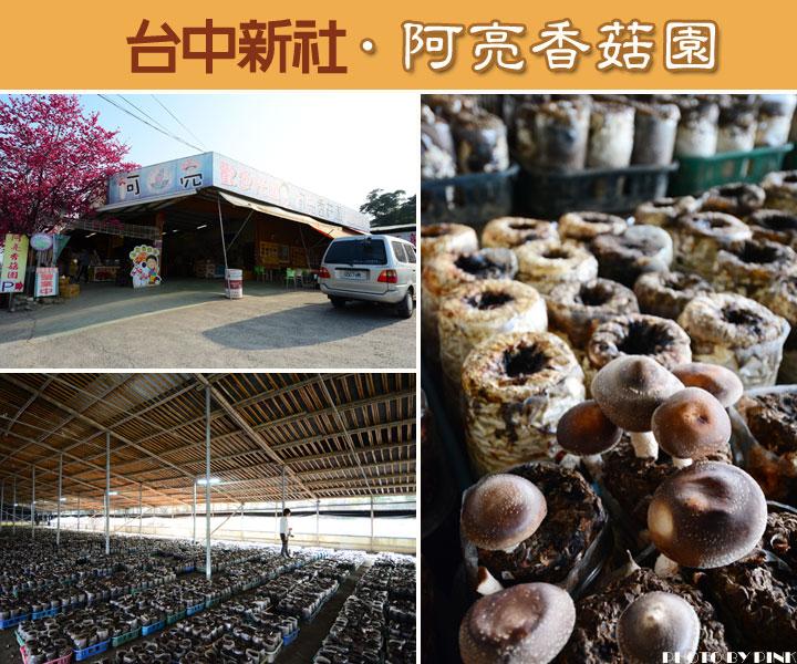 台中新玩法!新社「阿亮香菇園」採菇、吃菇、買菇趣~-1.jpg