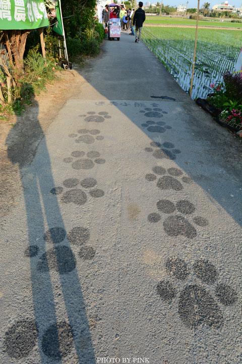 「台中地景藝術節」迷失的小熊現身。讓我們一起愛護這塊土地!-DSC_5967.jpg