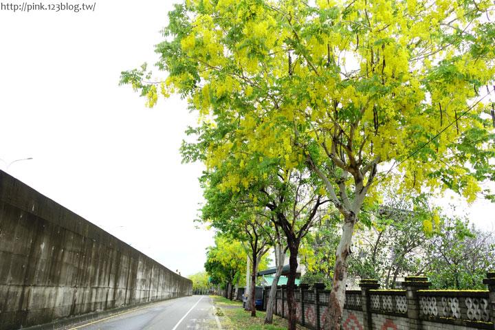 最美的黃金大道「中投公路阿勃勒」美麗盛開中…-DSC00489.jpg