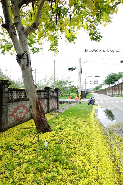 最美的黃金大道「中投公路阿勃勒」美麗盛開中…-DSC00497.jpg