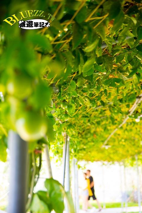 赤腳ㄚ生態農莊-DSC_2471.jpg