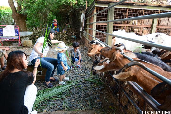 【台中景點】益健乳羊牧場.超有趣的餵羊初體驗!-DSC_4144.jpg