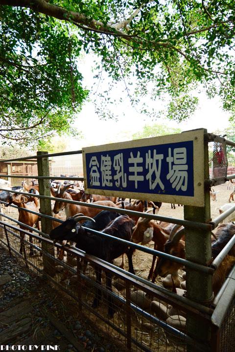 【台中景點】益健乳羊牧場.超有趣的餵羊初體驗!-DSC_4167.jpg