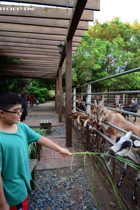 【台中景點】益健乳羊牧場.超有趣的餵羊初體驗!-DSC_4211.jpg