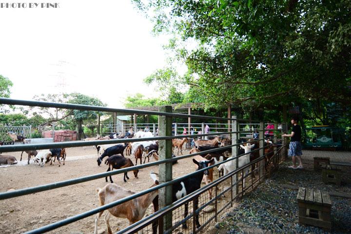 【台中景點】益健乳羊牧場.超有趣的餵羊初體驗!-DSC_4232.jpg