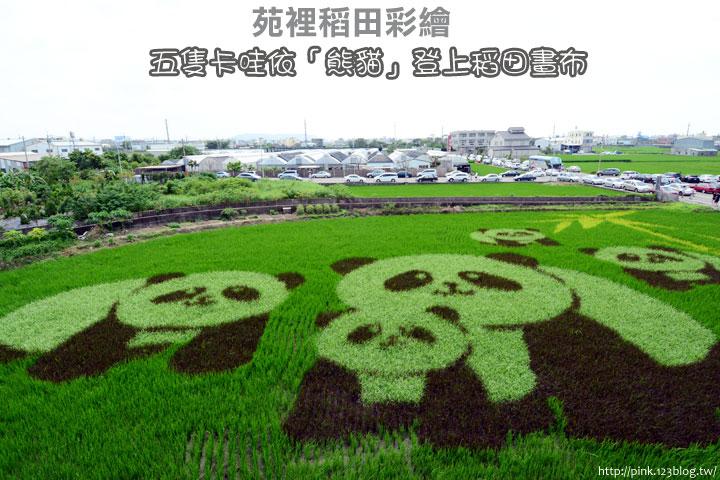 【苑裡景點】熊貓稻田彩繪可愛登場!-DSC_5782.jpg