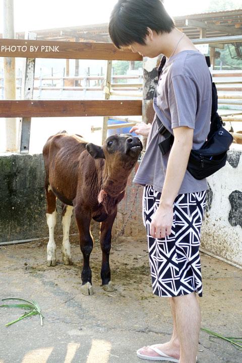 【彰化景點】大山休閒牧場。擠牛奶、餵牛牛、尚青的鮮奶置加啦!-DSC02239.jpg