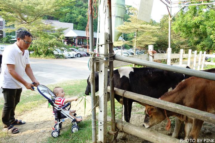【彰化景點】大山休閒牧場。擠牛奶、餵牛牛、尚青的鮮奶置加啦!-DSC02243.jpg