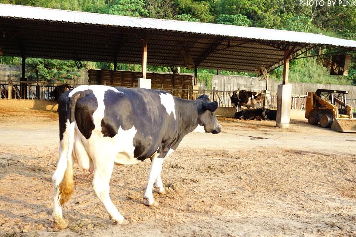 【彰化景點】大山休閒牧場。擠牛奶、餵牛牛、尚青的鮮奶置加啦!-DSC02306.jpg