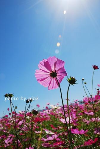 DSC_0129.jpg