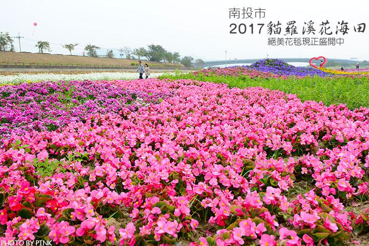 【南投景點】2017貓羅溪花海田。絕美花毯現正盛開中!-1.jpg