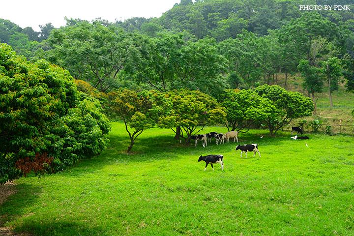 【彰化市景點】日月山景休閒農場。來此可享受親子同遊/餵牛體驗/休閒烤肉/美食餐廳,超好玩的農場新遊憩!-DSC_0356.jpg