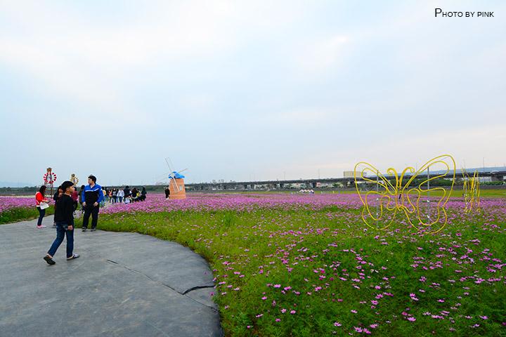 【2018南投花海】貓羅溪景觀花海,繽紛登場!-DSC_7586.jpg