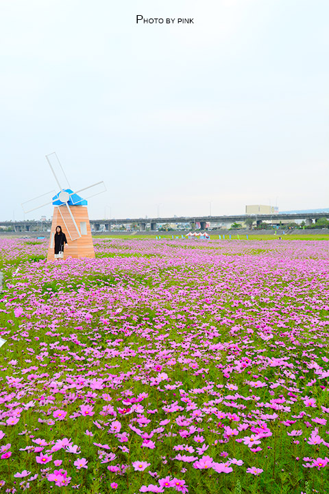 【2018南投花海】貓羅溪景觀花海,繽紛登場!-DSC_7587.jpg