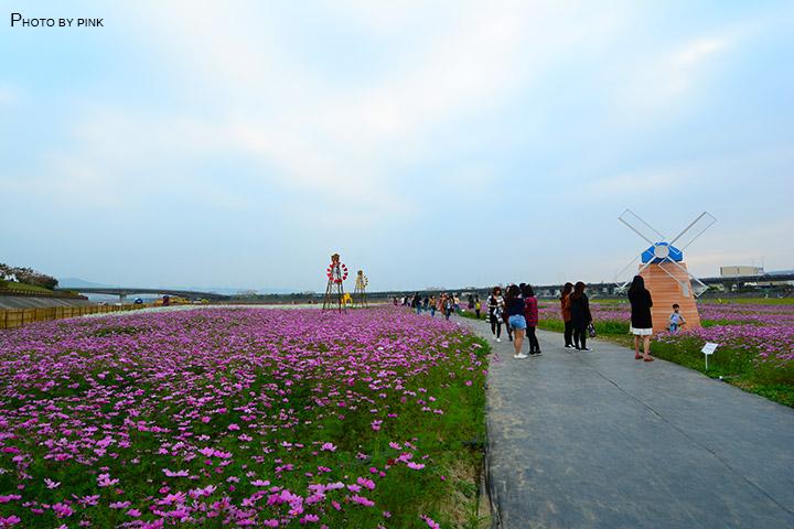 【2018南投花海】貓羅溪景觀花海,繽紛登場!-DSC_7592.jpg
