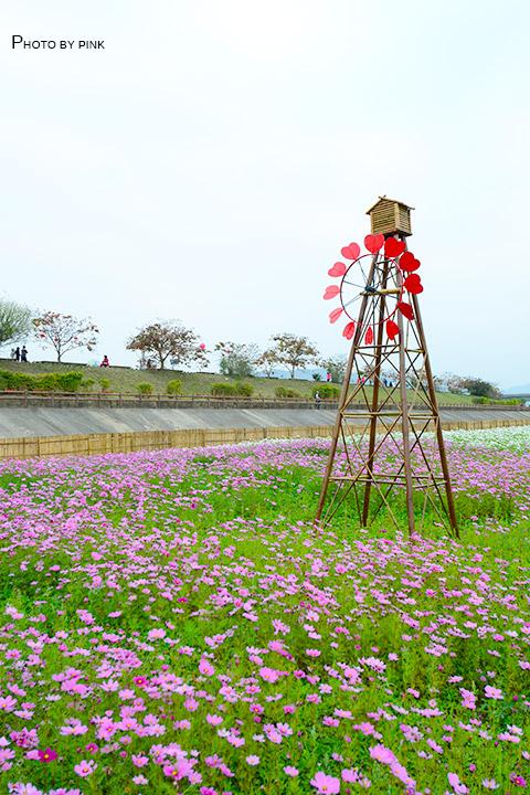 【2018南投花海】貓羅溪景觀花海,繽紛登場!-DSC_7599.jpg