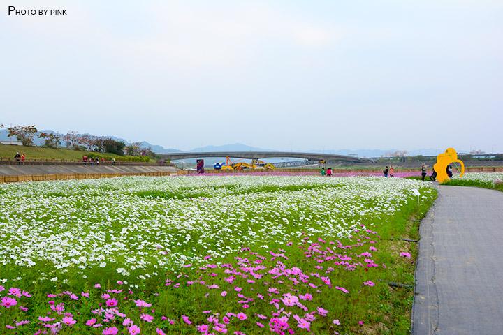 【2018南投花海】貓羅溪景觀花海,繽紛登場!-DSC_7607.jpg