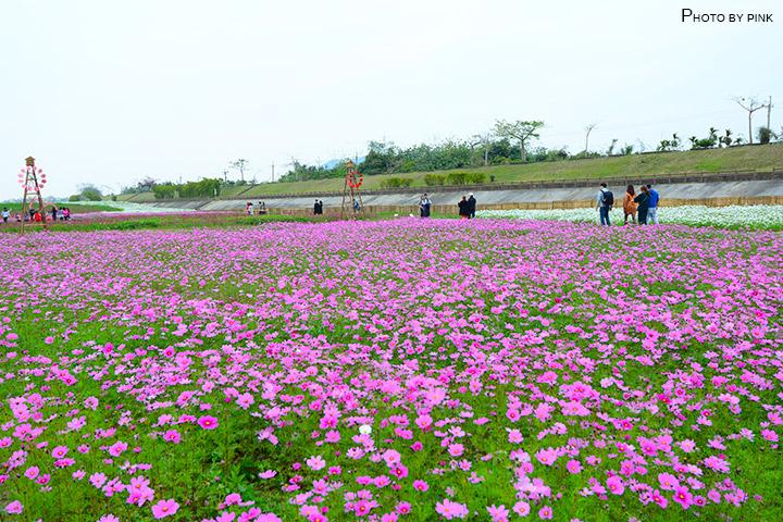 【2018南投花海】貓羅溪景觀花海,繽紛登場!-DSC_7657.jpg