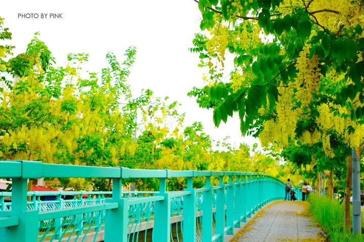 【南投阿勃勒】南投市福崗路上下起了黃金雨,季節限定阿勃勒美麗盛開中。-DSC03129.jpg