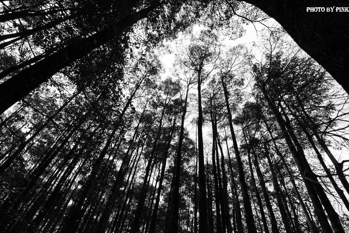 【埔里秘境景點】埔里黑森林。隱藏版夢幻秘境,IG、廣告最佳拍攝點。-DSC_4465.jpg