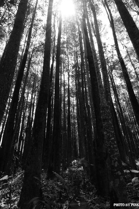 【埔里秘境景點】埔里黑森林。隱藏版夢幻秘境,IG、廣告最佳拍攝點。-DSC_4475.jpg