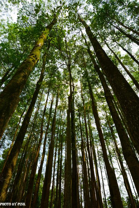 【埔里秘境景點】埔里黑森林。隱藏版夢幻秘境,IG、廣告最佳拍攝點。-DSC_4512.jpg