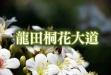 龍田桐花大道-龍田桐花大道.jpg