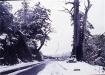 檜谷-南橫檜谷雪景