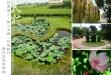 彰化大村村東國小、雙心池塘、花樹銀行